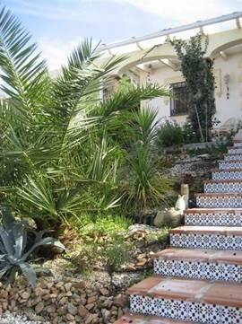 Voortuin met een aantal palmbomen.