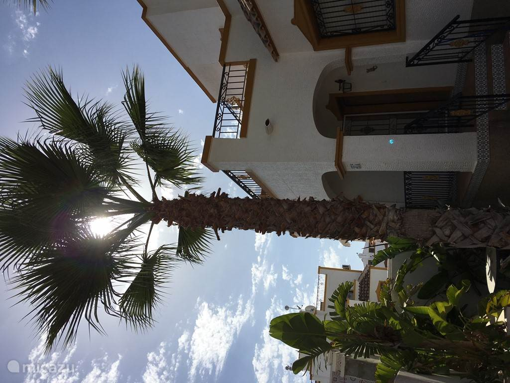 Mooie hoge palmbomen zorgen voor schaduw op de hete dagen,